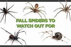 Oklahoma Spiders Identification Chart Usa Spider Identification Chart Visual Ly