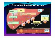 Statin Mechanism Of Action Role Of Statin In Secondary Prevention Of Acs