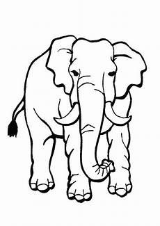 Malvorlagen Zum Ausdrucken Tiere Tiere Malvorlagen 13 Ausmalbilder Gratis