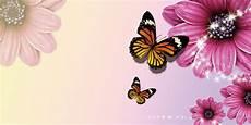 Mariposas Y Flores Flores Y Mariposas De Fondo Flores Mariposa Antecedentes