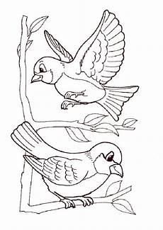 Malvorlage Vogel Kostenlos Ausmalbilder Vogel Zum Ausdrucken Kinder Zeichnen Und