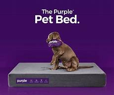 purple 174 pet bed review is this pet bed worth buying