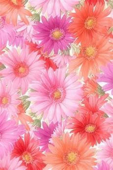live flower wallpaper iphone flower wallpaper wallpapersafari