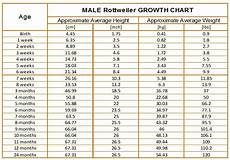 Rottweiler Growth Chart Rottweiler Growth Chart Karma S Rottweilers