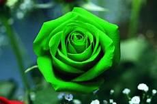 desktop green flower wallpaper green flower wallpaper hd pictures hd wallpapers cool