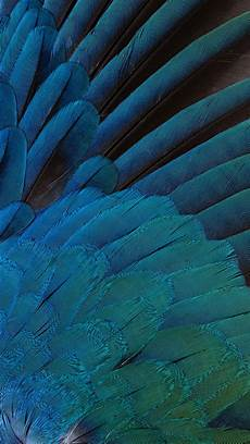 iphone blue feather wallpaper blue feathers wallpaper free iphone wallpapers