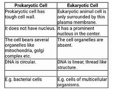 Difference Between Prokaryotic And Eukaryotic Three Differences Between Prokaryotic And Eukaryotic Cells