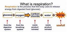 Mastery Check 2 Respiration