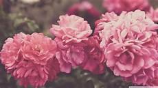 Flower Wallpaper Vintage Hd by Wallpapers Vintage Hd Im 225 Genes Taringa