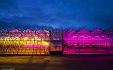 Led Lights Greenhouse Yellow And Purple Greenhouse Could Boost Plant Growth With