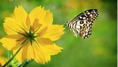 Mariposas Y Flores Harvey Rivadeneira Galiano Ser Feliz