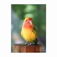 Lazar Design Discount Code Lovebird On A Pedestal Photograph By Andrea Lazar