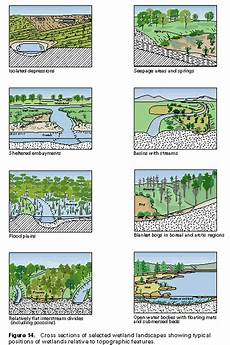 Cowardin Classification Chart History Of Wetlands In The Conterminous United States