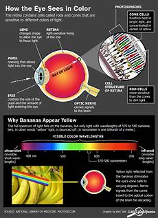 Seeing Colored Lights In Vision How Do The Eyes Perceive Colour Colour Management