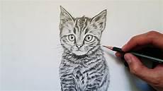 dibujos de gatos c 243 mo dibujar un gato realista explicado paso a paso