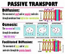 what type of transport is osmosis biology passive transport poster by teaching managed tpt