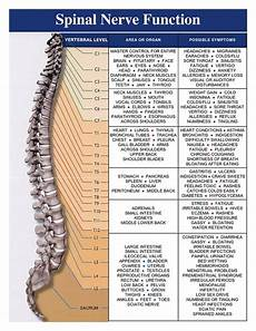Chart Of Nerves In Back Spinal Nerve Function Chart Spinal Cord Injury