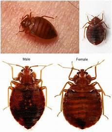 one bedbug in room bites 171 got bed bugs
