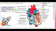 Chart Of Blood Flow Through Heart Blood Flow Through The Heart Test Boost For Sat Subject