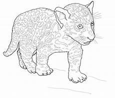 Kinder Malvorlagen Jaguar Ausmalbilder Jaguar Calendar June