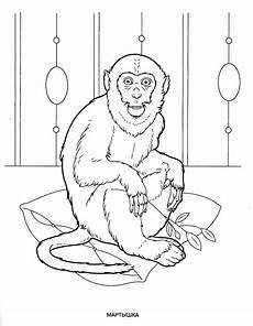 animals coloring pages for to print for free