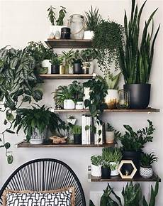 10 low sunlight indoor plants for your home decor