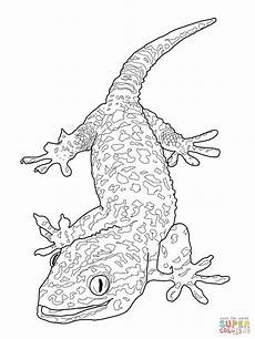 ausmalbild tokay gecko ausmalbilder kostenlos zum