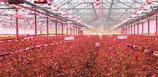 Led Lights Greenhouse Led Lighting Research In Greenhouses Greenhouses Going