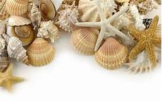 Sea Shells Background Seashell Wallpapers For Desktop We Need Fun