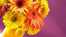 flower images hd wallpapers jaspreet rekhi 40 colorful flowers wallpapers hd