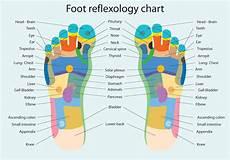 Reflexology Chart Foot Reflexology Chart Download Free Vectors Clipart