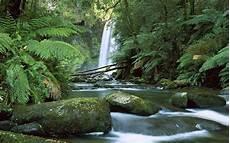 Rainforest Background Tropical Rainforest Wallpapers Wallpaper Cave