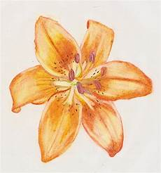 Tiger Lily Flower Designs Tiger Lily Art 187 Ideas