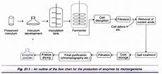 Flow Chart Of Amylase Production Enzyme Technology Application And Commercial Production