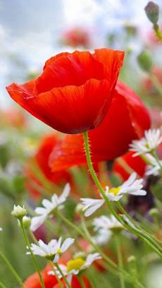 flower wallpaper for cell 10 images about beautiful flowers wallpapers pictures pc