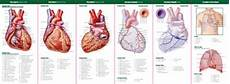 Anatomy Of The Heart Pocket Study Guide 2nd Edition