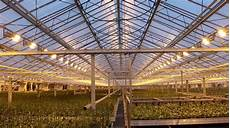 Led Lights Greenhouse Led Lighting Technology In Plant Growth High Cri Led