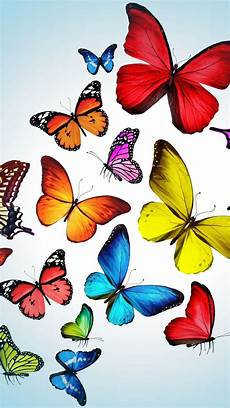 butterfly wallpaper in iphone iphone 5 wallpapers photo bugs in 2019 butterfly