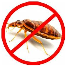 pest services termite bedbugs cockroach