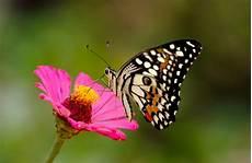 Mariposas Y Flores Mariposas Y Flores Macro Foto Premium