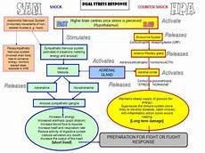 Stress Response Flow Chart How Your Stress Response Works Dr James L Wilson S