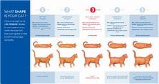 Average Cat Weight Chart Weight Is My Norwegian Forest Cat Too Heavy Pets