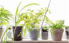 Low Light Apartment Plants 10 Low Light Houseplants To Brighten Your Tiny Apartment