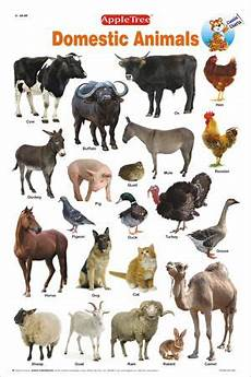 Animal Chart For Kindergarten Educational Charts Classic Charts Domestic Animals