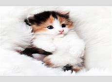 Amazon.com: Cute Cats live Wallpapers: Appstore for Android
