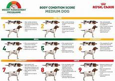Ideal Weight For Dogs Weight Chart How To Determine Your Dog S Ideal Weight