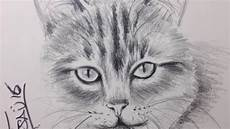 dibujos de gatos gato a lapiz dibujos de gatos
