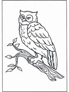 Malvorlage Vogel Auf Ast Eule Auf Ast Ausmalbilder V 246 Gel