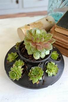 Unique Planters For Succulents Diy Planters For Succulents That Is Unique And Pretty