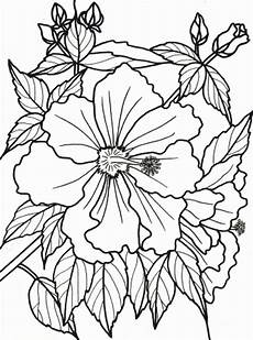 Printable Coloring Pages For Seniors Bougainvillea Coloring Bougainvillea Coloring